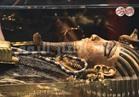 """بالصور   إعادة تطوير قاعة كنوز"""" توت عنخ آمون"""" بالمتحف المصري"""