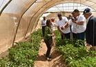 الاستثمار: 46 مليون دولار لدعم قطاع الزراعة بالإسماعيلية