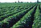 """""""الزراعة""""بدء تدريب أوائل الخريجين للعمل في مشروع الـ 100 ألف صوبة"""