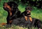 بالفيديو.. رأي الشارع في دفع »ضريبة رفاهية« على تربية الكلاب