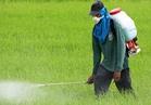 «الزراعة»:خطة لتدريب 50 الف متدرب على الإستخدام الأمثل للمبيدات خلال 5 سنوات