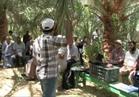 """""""الفاو"""" ينظم برنامج تدريبي للمزارعين عن جني البلح بالوادي الجديد"""