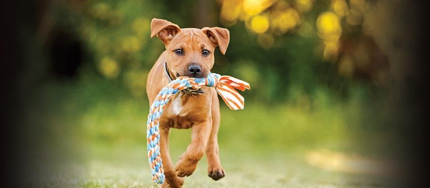 بيزنس الكلاب أسعار تصل لـ400 ألف جنيه وهذه طرق الترخيص والتطعيم فيديو بوابة أخبار اليوم الإلكترونية