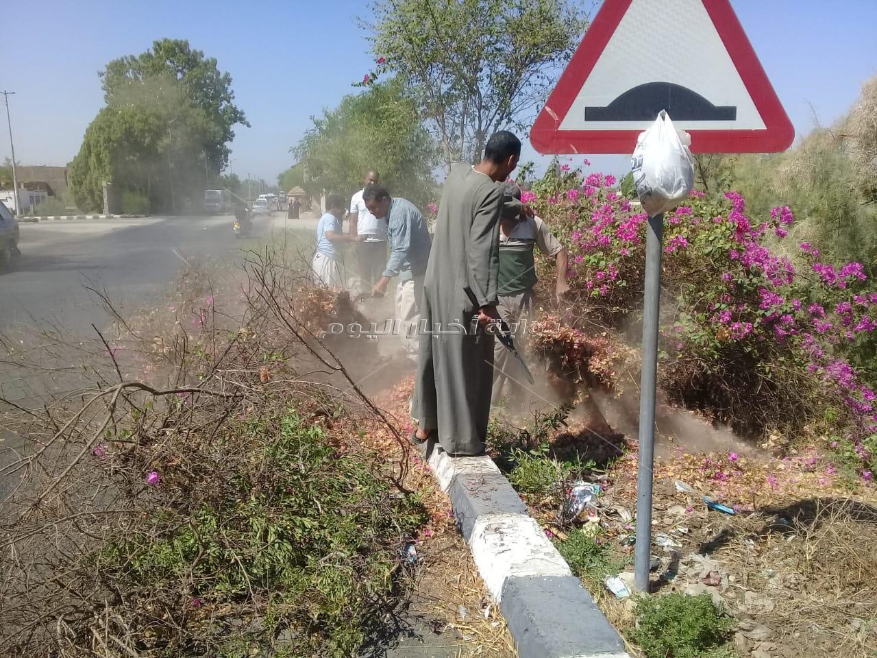 تجميل وتهذيب أشجار طريق القاهرة أسوان عند مدينة الزينية