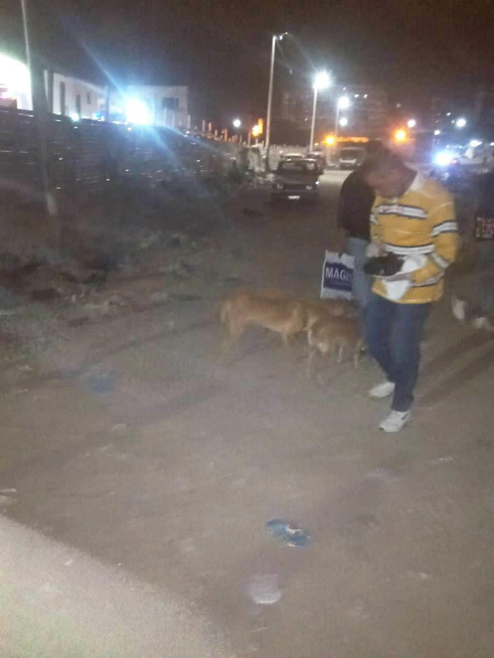 بعد عقر 37 شخصا..حي العجمي يطارد الكلاب الضالة في الإسكندرية  صور