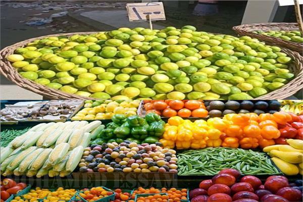 الزراعة مصر الأول عالميا في حجم الصادرات وسعر الليمون سينخفض 70