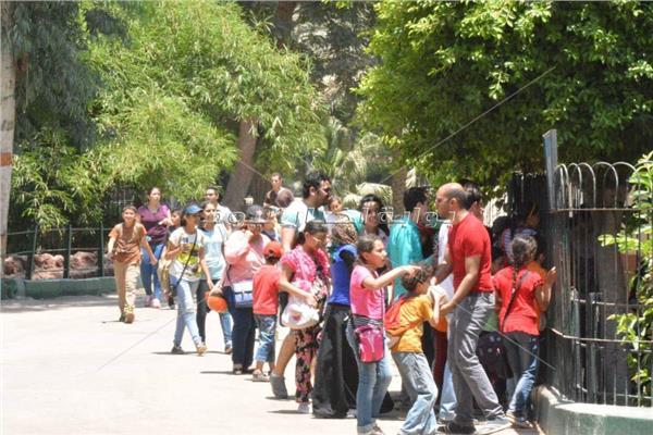 حصاد أول أيام عيد الأضحى ذبح 3715 أضحية و40 ألف زائر لـ حديقة الحيوان بوابة أخبار اليوم الإلكترونية
