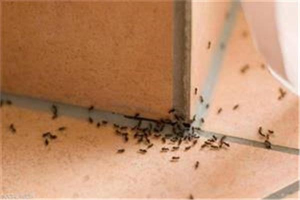 ممل مكثف قبر النمل في المنزل ماذا يعني Comertinsaat Com
