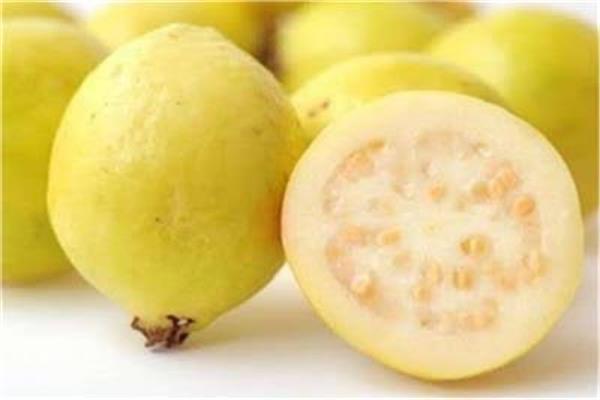 لصحة جيدة الجوافة فاكهة الشتاء فوائد لا تحصى بوابة أخبار اليوم الإلكترونية