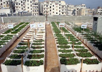 إنتاج الخضر فوق أسطح المنازل pdf